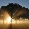 頭が良くなる物質BDNF(脳由来神経成長因子)は日光を浴びれば増える!