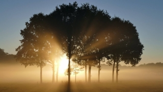 BDNF 脳由来神経栄養因子 日光 朝日
