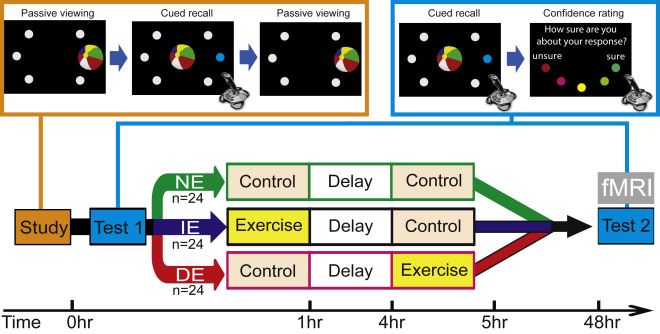 運動 学習 脳 効果 タイミング