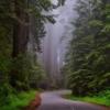 最強のストレス解消法「森へ行く」が効果絶大!バイオフィリアでリラックス&健康