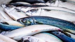 魚 食品 総死亡リスク 健康