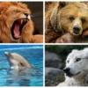 【クロノタイプ診断】睡眠を4種類の動物に分類!あなたは「ライオン」か、それとも「