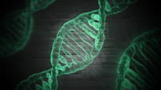 マッスルメモリー 遺伝子