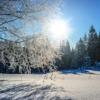 気温の変化と日照時間は自殺率にどのくらい影響を与えているの?