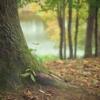 科学が認めた万能の最強健康法、それは「緑豊かな自然と触れ合う」