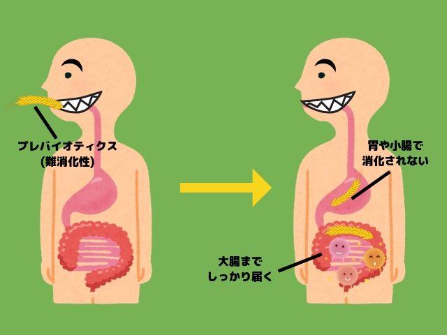 腸内細菌 食物繊維 プレバイオティクス 仕組み