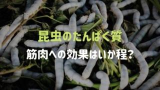 昆虫のたんぱく質は筋トレに効果があるのか?
