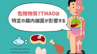 TMAOは魚で最も増える!けれど本当のカギは「腸内細菌」かもしれない。