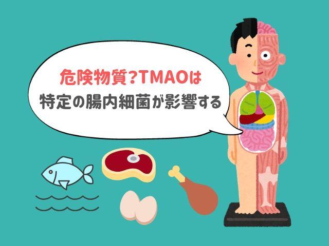 TMAOは魚で最も増える!けれど本当のカギは「腸内細菌」かもしれない