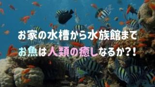 水槽や水族館のお魚は人類の癒しなるか?戯れることで享受できる健康効果とは