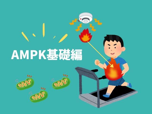 【図解】体内に備わった超優秀なエネルギー感知機能「AMPK」基礎編!プチ断食やメトフォルミンとの関係も解説。