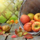 りんごポリフェノールが女性のお肌を紫外線から守ってくれるみたいだ