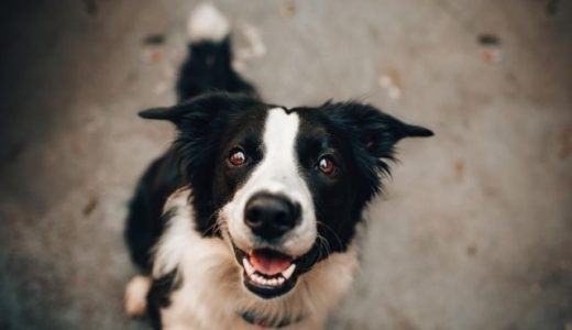 ペットの犬にも健全なメンタルヘルスのために活発な「犬付き合い」が必要だ!