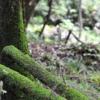 森林浴が健康に良いことが確定した件。