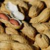 おやつには「ナッツ・豆類」で決まり!一日一掴みのナッツで健康体に。