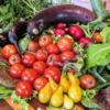 アンチエイジングは食生活から!DII(食事の炎症指数)を使って「慢性炎症」を予防しよ
