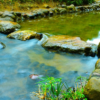 自然の音を聴くだけでバイオフィリア(自然愛)によるリラックス&注意力アップ効果